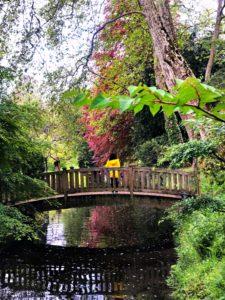 pont japon jardin