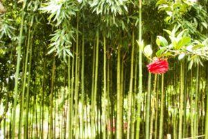 xplorateur bambou